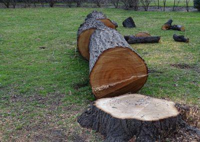 Prix-abattage-dun-arbre