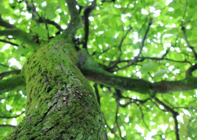 arboriculteur-montreal