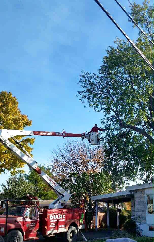 Camion à nacelle pour entretien d'arbre